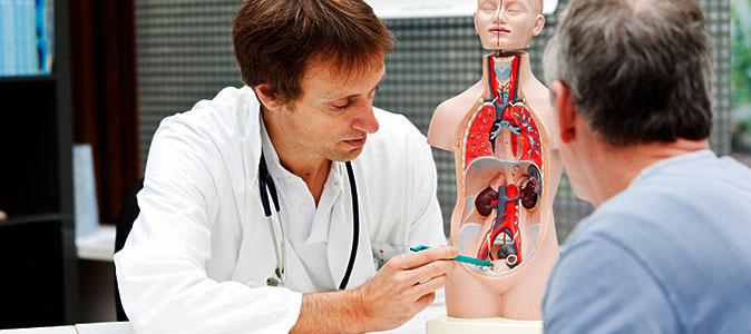 médico indica em um molde humano o local da próstata