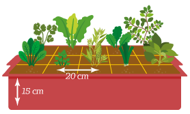 Ilustração de um vaso com várias plantas diferentes com as especificações de 20 cm de largura entre as plantas e mostrando a profundidade de 15cm do vaso